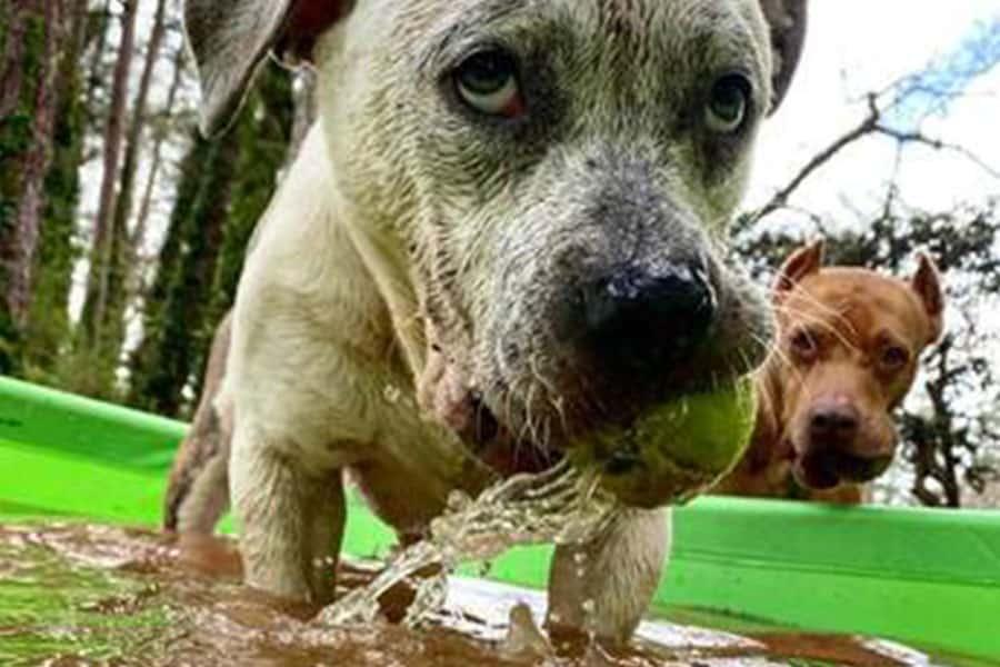 5  Health Tips for Pet Ownership in HOTlanta