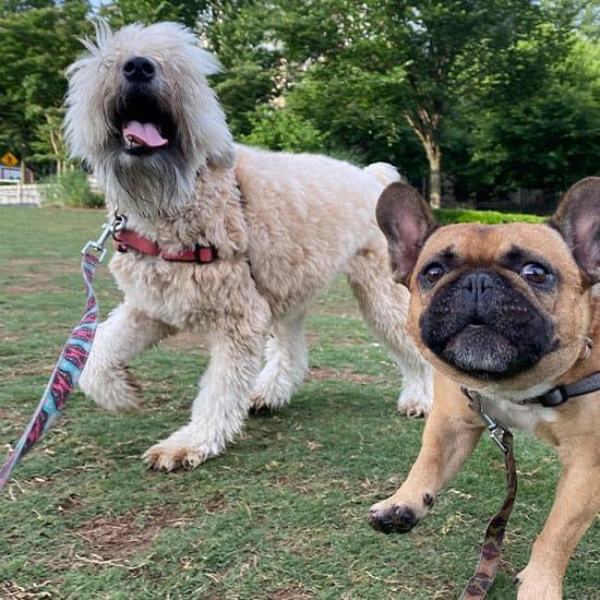 Dog Walks & Daily Visits