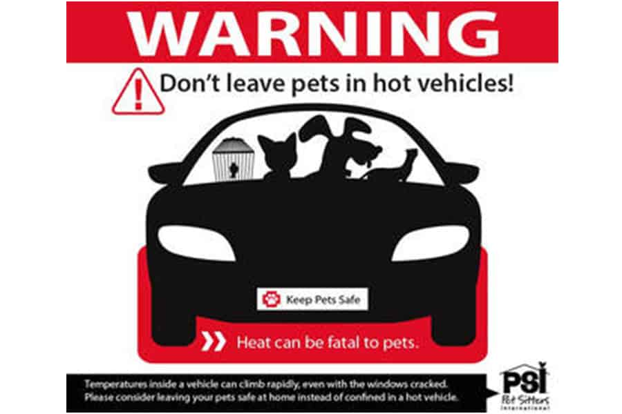 Hot cars and dogs don't mix!