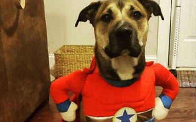 Keeping Your Pets Safe During Howl-O-Ween