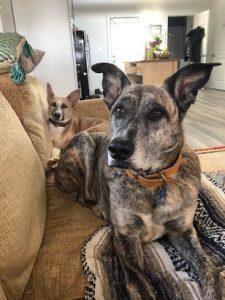 Senior Dog Care Tips & Tricks