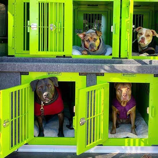 Pet Transport in Atlanta and Decatur
