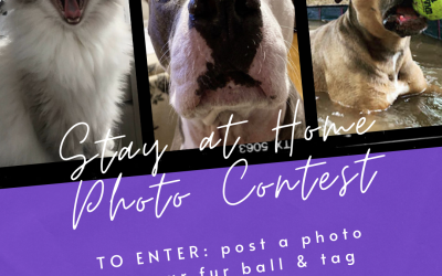 Stay at Home Photo Contest