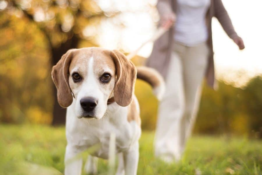 5 Reasons to Walk Your Dog