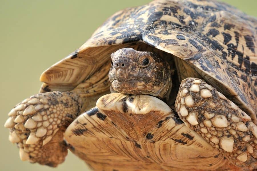 Helpful Tips for Keeping Pet Turtles and Tortoises